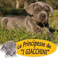 LE PRINCIPESSE DE 'I GIACCHINI'